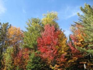 Autumn Colour: breathtaking!